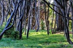 Albero nella primavera Fotografie Stock Libere da Diritti