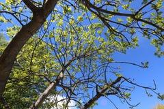 Albero nella primavera Fotografia Stock Libera da Diritti