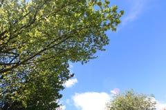 Albero nella primavera Immagini Stock
