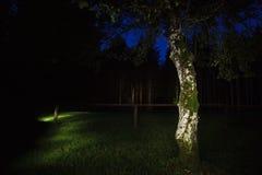 Albero nella sera Fotografie Stock