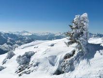Albero nelle alpi austriache Fotografia Stock Libera da Diritti