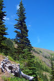 Albero nelle montagne Fotografia Stock