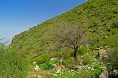 Albero nelle montagne Fotografia Stock Libera da Diritti