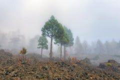 Albero nelle montagne nuvolose Immagini Stock Libere da Diritti