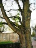 Albero nello Schlosspark meraviglioso Fulda fotografia stock