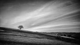 Albero в nero bianco e Стоковая Фотография