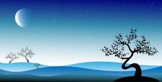 Albero nero dei bonsai Fotografia Stock