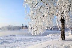 Albero in neve Fotografia Stock
