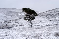 Albero in neve Immagini Stock