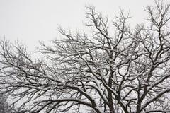 albero nevoso Fotografie Stock Libere da Diritti