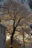 albero nevoso Immagine Stock Libera da Diritti