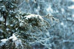 albero nevoso fotografia stock