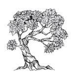 Albero nodoso con le foglie Immagini Stock