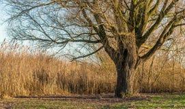 Albero nudo al sole Fotografia Stock Libera da Diritti