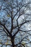 Albero nudo in autunno fotografie stock