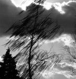 Albero nudo con la nuvola scura in bianco e nero Fotografia Stock