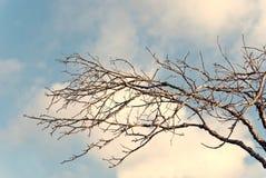 albero nudo delle filiali Immagini Stock Libere da Diritti