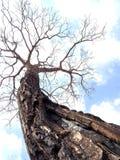 Albero nudo ed i suoi bei rami su una stagione fredda fotografia stock