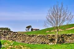 Albero nudo, granaio e parete di pietra asciutta. immagini stock