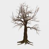 Albero nudo isolato Fotografia Stock