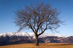 Albero nudo nell'inverno - alpi italiane Immagine Stock
