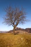 Albero nudo nell'inverno - alpi italiane Fotografia Stock