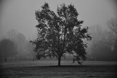 Albero nudo nell'orario invernale Fotografia Stock Libera da Diritti