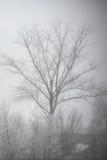 Albero nudo nella nebbia Fotografia Stock Libera da Diritti