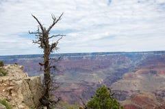 Albero nudo sopra il canyon Immagine Stock
