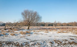 Albero nudo su un'area eliminata nella foresta Immagini Stock Libere da Diritti