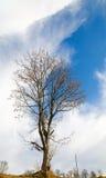 Albero nudo sulla priorità bassa del cielo Fotografia Stock Libera da Diritti