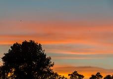 Albero ombreggiato al tramonto, cielo arancio, fine su, paesaggio Fotografie Stock