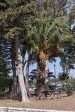 Albero ombreggiato sul lungomare alla città di Corfù sull'isola greca di Corfù Fotografia Stock