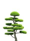 Albero ornamentale Immagini Stock
