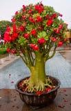 Albero ornamentale in un vaso Fotografie Stock