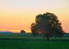 Albero in Palatinato al crepuscolo Fotografie Stock