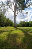 Albero in parco Fotografia Stock Libera da Diritti