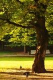 Albero in parco Fotografia Stock