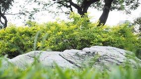 Albero in parco con alta roccia fotografia stock