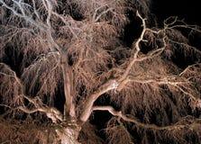 Albero-particolare della ciliegia di notte Fotografie Stock