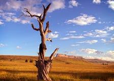 Albero in pascolo Fotografia Stock Libera da Diritti