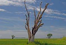 Albero petrificato nel parco nazionale dei terreni paludosi Fotografia Stock