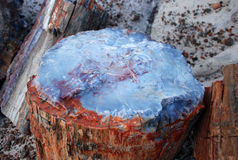 Albero Petrified fotografie stock libere da diritti