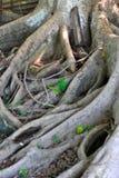 Albero piantato alla terra fotografie stock
