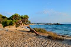 Albero piegato su una spiaggia Fotografia Stock