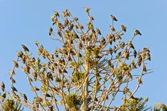 Albero in pieno degli uccelli Immagini Stock