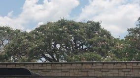 albero in pieno degli uccelli delle cicogne fotografia stock