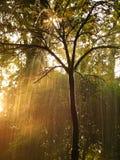 Albero in pioggia Fotografia Stock Libera da Diritti