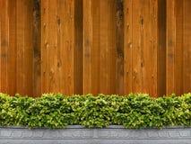 Albero in POT con la parete di legno Immagine Stock
