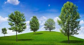 Albero in prato verde Fotografia Stock Libera da Diritti